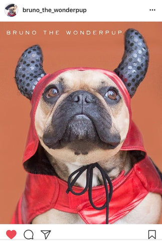 french-bulldog-halloween-costume-devil-barkley
