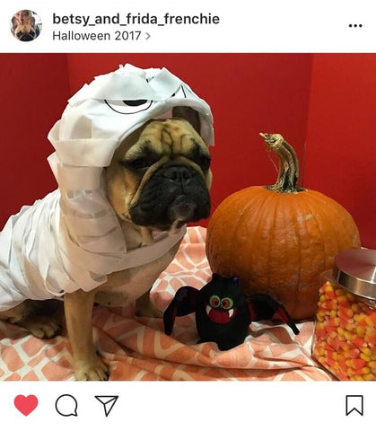 mummy-pug-halloween-costume-barkley-pawsh