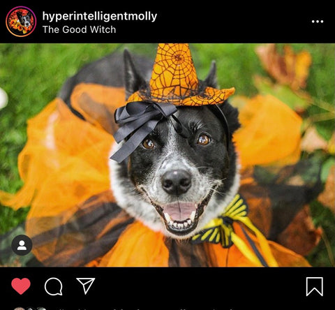 Barkley-and-Pawsh-Good-Witch