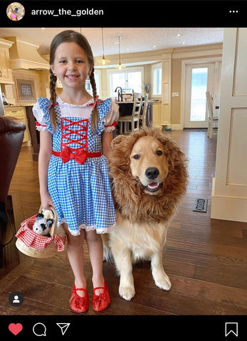 Barkley-and-Pawsh-Wizard-of-Oz
