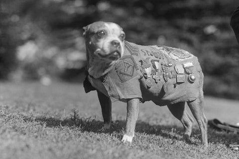 sgt-stubby-war-hero