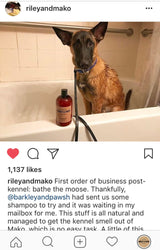 All-Natural Dog Wash