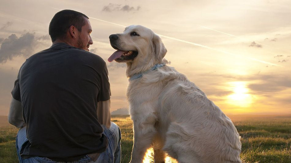 Devotion Between Dogs and Their Owners, in 5 Heart Wrenching Tales