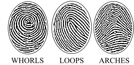 Fingerprint Whorls, Loops and Arches seen in Fingerprint Jewellery