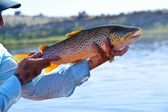 A Guided Day on the BLC with the Shoshone Cowboy – East Rosebud Fly