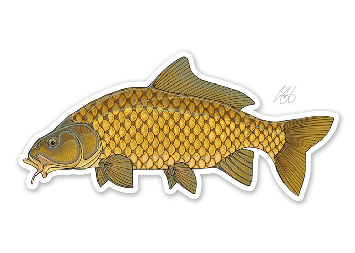 Common Carp Decal