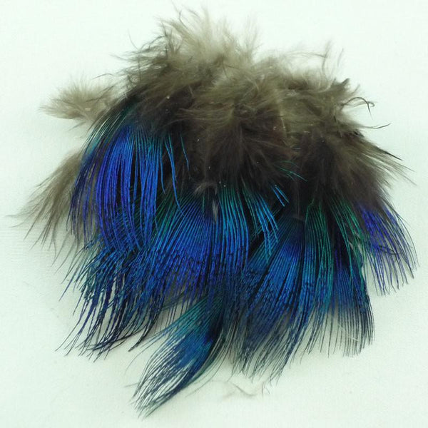 Blue Peacock Feather - East Rosebud Fly & Tackle - Free Shipping, No Sales Tax