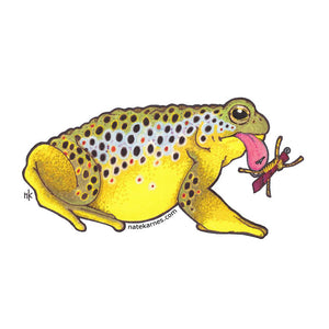 Brown Trout Toad Decal - East Rosebud Fly & Tackle - Free Shipping, No Sales Tax
