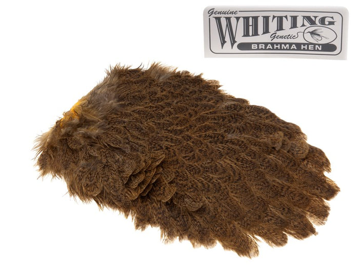 Whiting Brahma Saddle