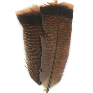 Cinnamon Tip Turkey Tail Feathers - East Rosebud Fly & Tackle - Free Shipping, No Sales Tax