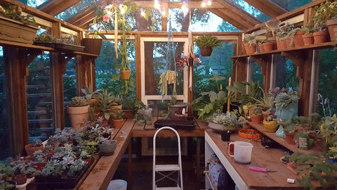 DIY Glass Greenhouse