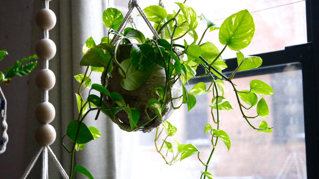 The Indoor Garden: a cure for the Winter blehs