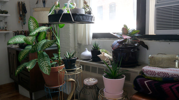 The current plant collection (see how much better that big leafy plant is doing?)