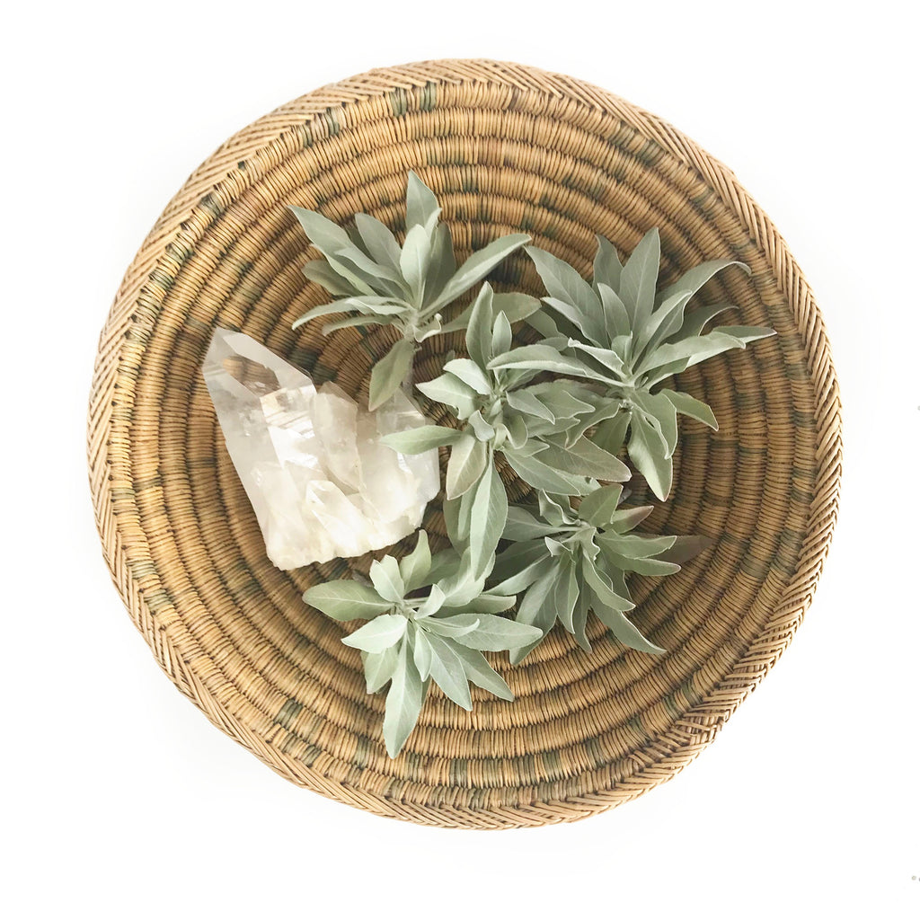 Complete White Sage Growing Guide – Aquarian Soul