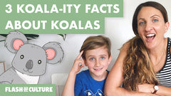 Fun facts about the koala