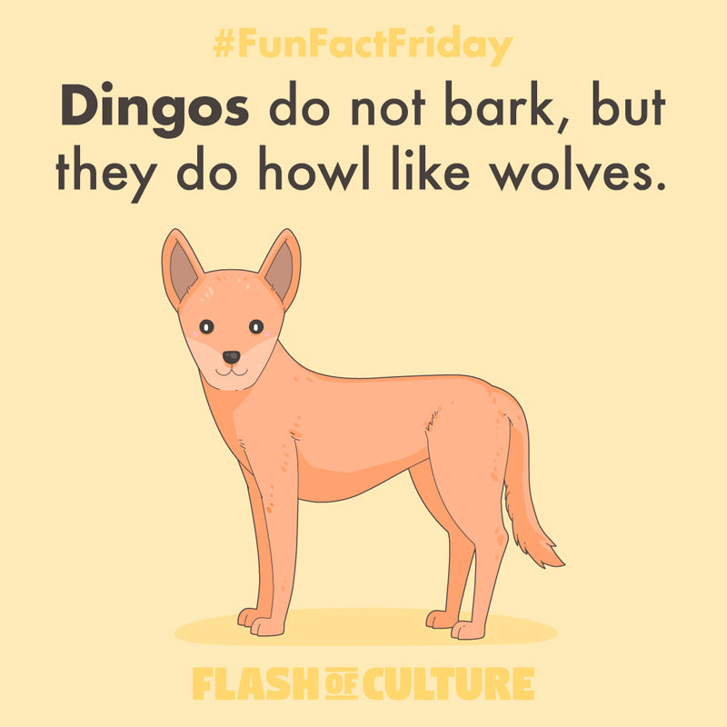 Dingos do not bark, but they do howl like wolves.