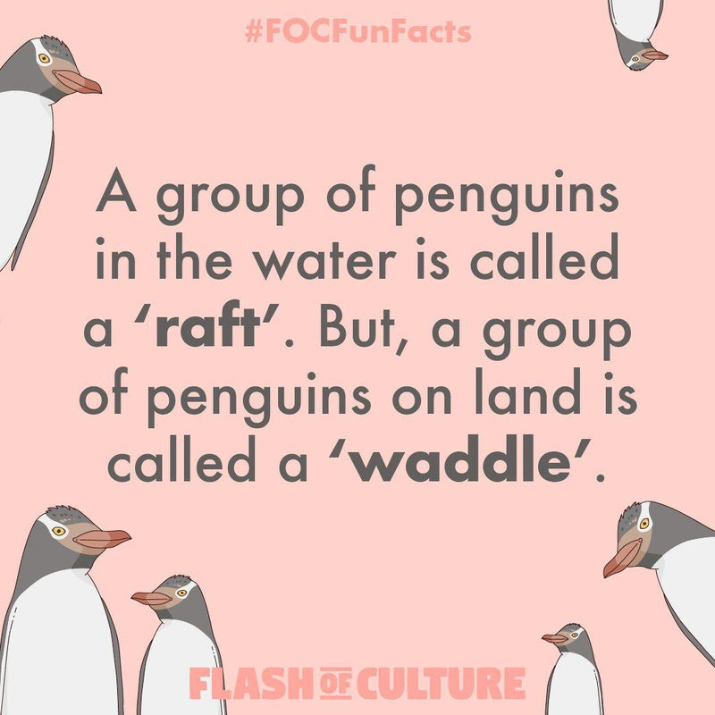 What do you call a group of penguins?