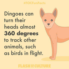 How far can dingoes rotate their head?