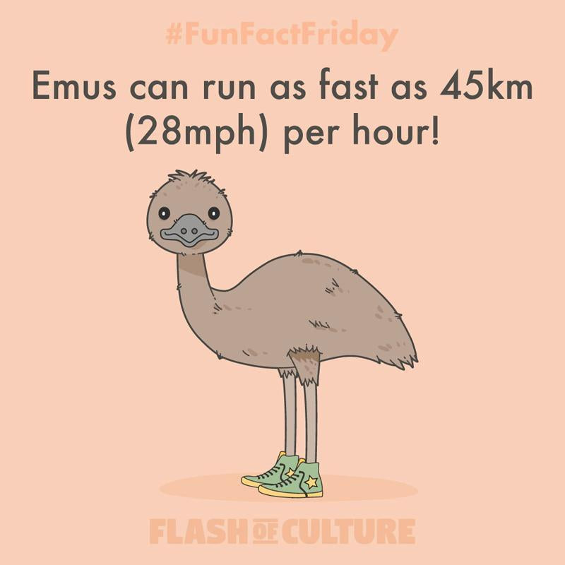 How fast can emus run?-Flash of Culture™