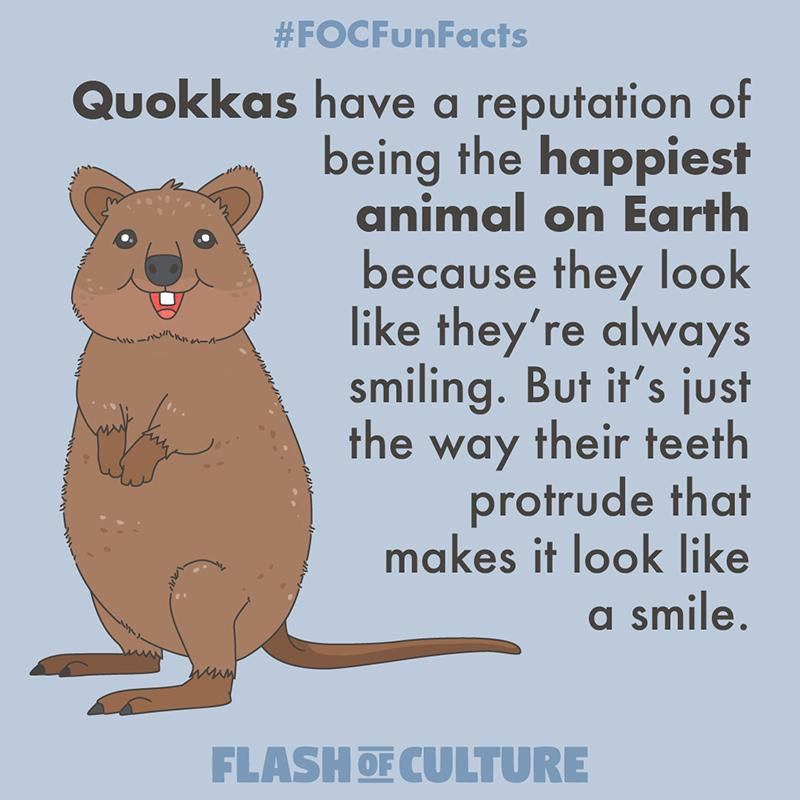 Are quokkas really smiling?-Flash of Culture™