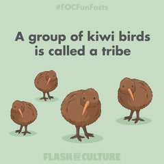 What do you call a group of kiwis?
