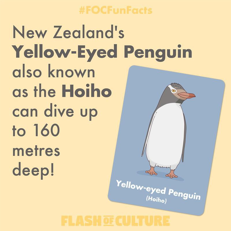 Yellow-Eyed Penguin fun fact