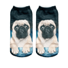 Perplexed Pug Ankle Socks - Dollar Socks Club