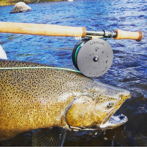 Douglas Argus Rex Fly Reel - Eco Fishing Shop