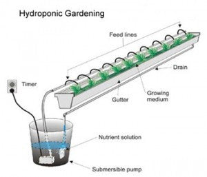 About Hydroponic Plant Food and why it is so important to get it right!