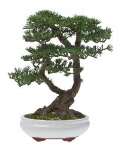 How to Choose the Correct Bonsai Plant Food