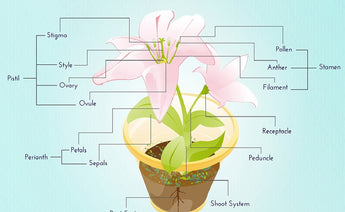 The Anatomy of the Flower