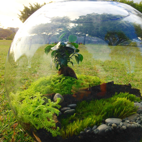 Large Orb Terrarium - Bonsai
