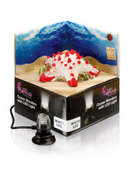 H2Show Ocean Wonders Starfish & White LED Light - Bay Bridge Aquarium and Pet