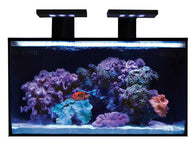 Innovative Marine NUVO Aquarium - Fusion Nano 20 - Bay Bridge Aquarium and Pet