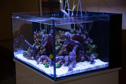 Innovative Marine Nuvo Aquarium Fusion Lagoon 50 Bay