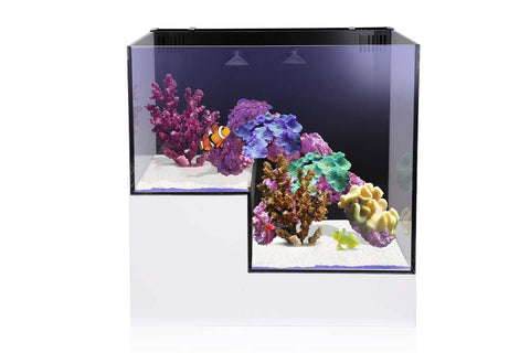Innovative Marine NUVO Concept - ABYSS Panorama Kit - Bay Bridge Aquarium and Pet