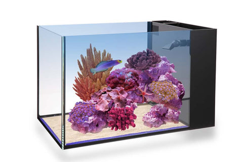 Innovative Marine NUVO Aquarium -  Fusion Peninsula 14 - Bay Bridge Aquarium and Pet
