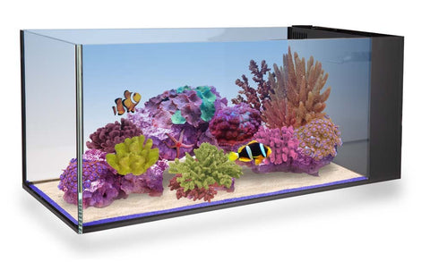 Innovative Marine NUVO Aquarium - Fusion Peninsula 20 - Bay Bridge Aquarium and Pet