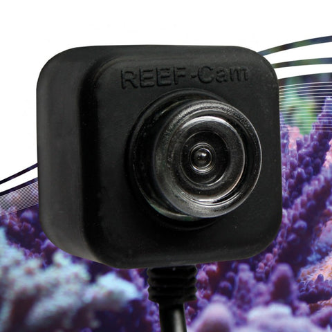 IceCap Reef-Cam - Bay Bridge Aquarium and Pet