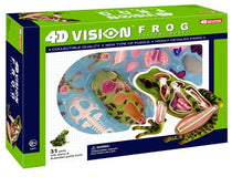 4D Vision Frog Anatomy Model by Tedco Toys
