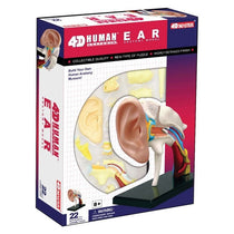 4D Human Anatomy Ear Model by Tedco Toys