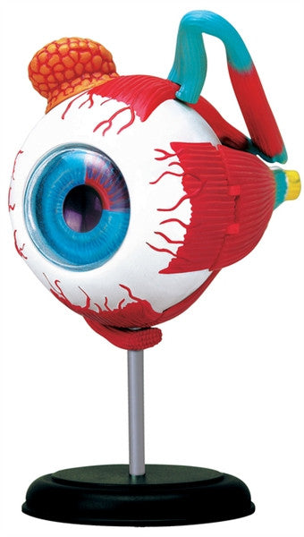 4D Anatomy Eyeball Model by Tedco Toys