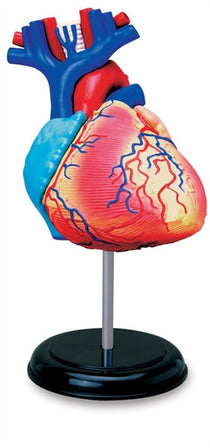 4D Anatomy Heart Model by Tedco Toys