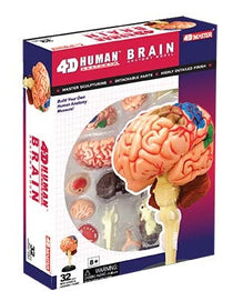 4D Human Anatomy Brain Model by Tedco Toys