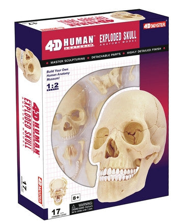 4D Human Anatomy Exploded Skull by Tedco Toys