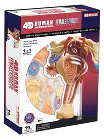 4D Human Anatomy Female Reproductive System by Tedco Toys