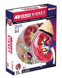 4D Human Anatomy Kidney Model by Tedco Toys