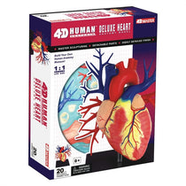 4D Human Anatomy Deluxe Heart Model by Tedco Toys