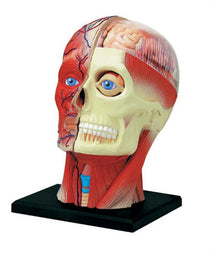 4D Human Anatomy Head Model by Tedco Toys