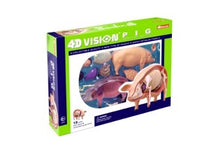 4D Vision Pig Anatomy Model by Tedco Toys